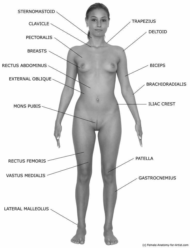 Nude female figure reference