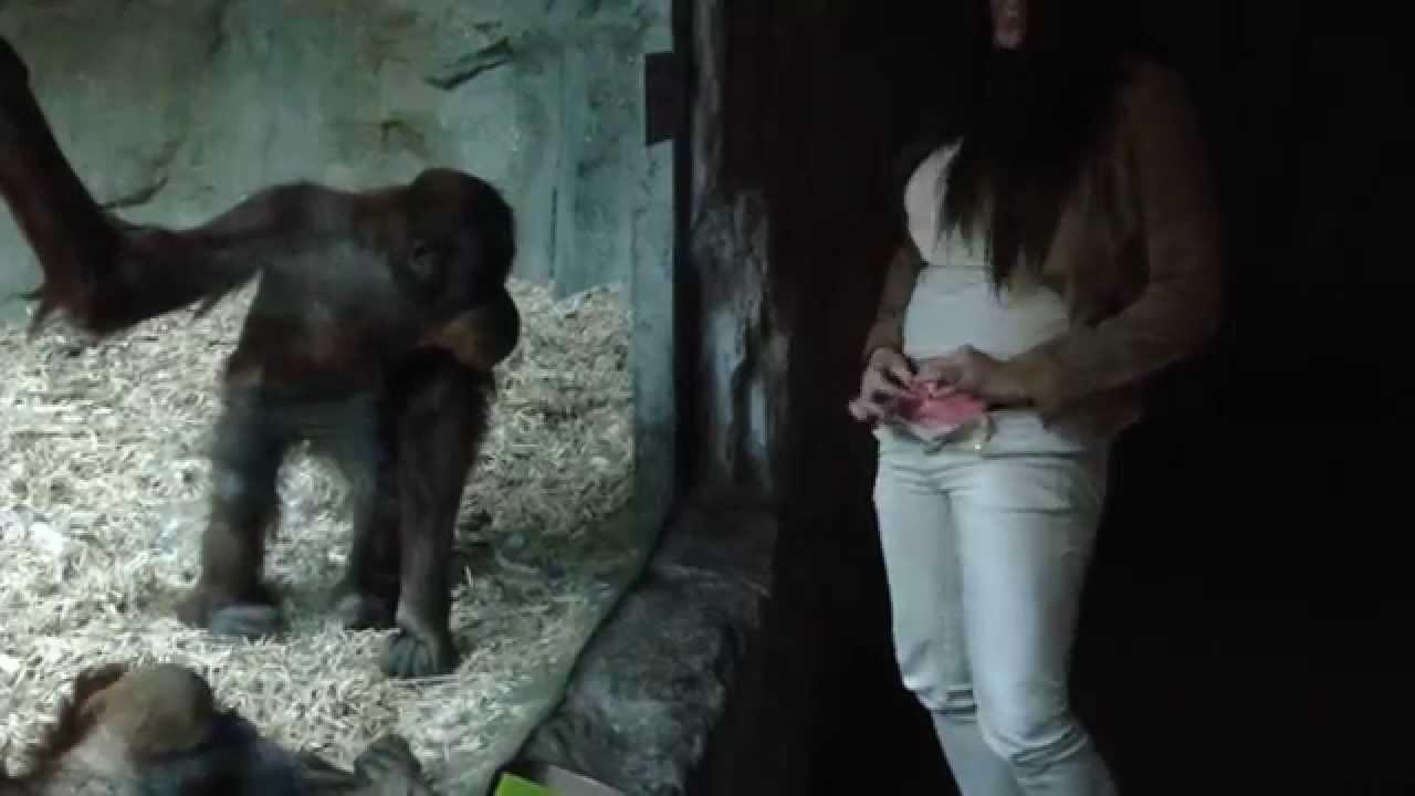 Monkey fucks girl